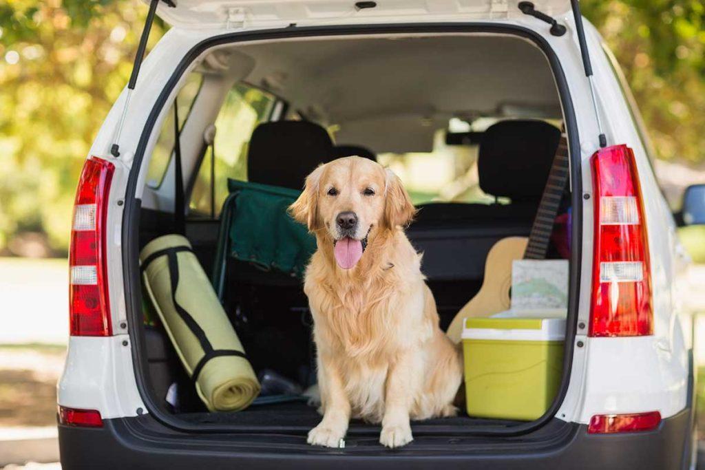 Cómo viajar en coche de manera segura con animales